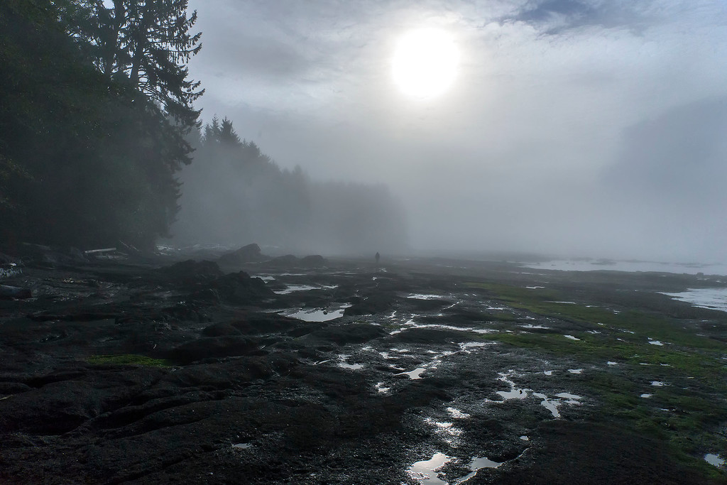 Solitude, morning fog on Botanical Beach, Vancouver Island, BC