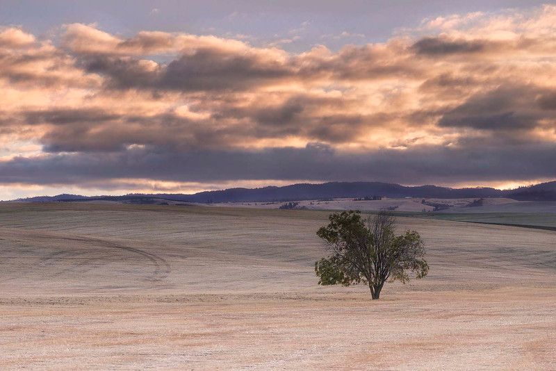 Lone Tree, Walla Walla, Washington