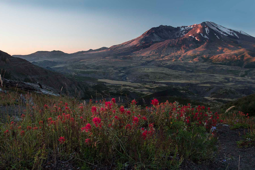 Sunrise on Mt St Helens with Indian Paint Brush, Washington
