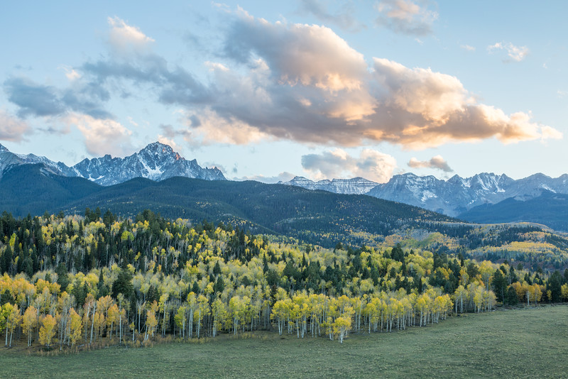A vast forest of quaking aspen (Populus tremuloides) and mixed pines lie in front of the San Juan Range. Taken in the Uncompahgre National Forest, Colorado, USA.