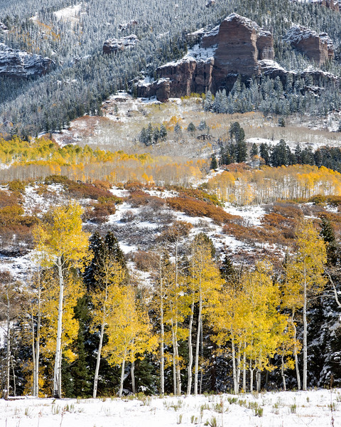 Fresh snow highlights the pines while scrub oak (Quercus gambelii) and quaking aspen (Populus tremuloides) lend fall color. Taken in Montrose County, Colorado, USA.