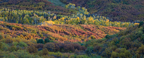 """Colorful Colorado Fall"""