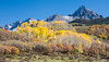 At the foot of Mt. Sneffels (14,031 feet in elevation), aspens (Populus tremuloides) and gambel oak (Quercus gambelii) colorfully display in fall.