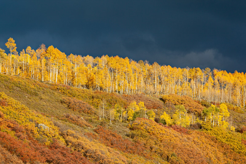 """Stormy Ridge""<br /> <br /> The sun breaks through a fall storm just before setting, illuminating the aspen (Populus tremuloides) and Gambel oak (Quercus gambelli). Taken in the Uncompahgre National Forest near Ridgway, Colorado, USA."