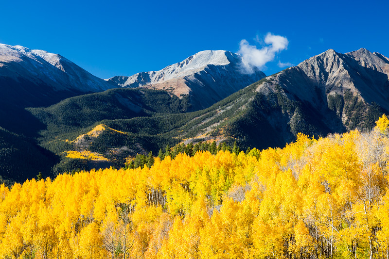 Aspen (Populus tremuloides) foliage in fall.  Mt. Hope (13,933 ft.)  is lightly topped with snow  and a hanging cloud in the center background, with Twn Peaks (13,333 ft.) to its right. Taken in the San Isabel National Forest, Colorado, USA.