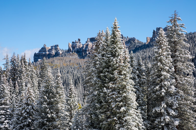 Snow-covered pines in the forest. Taken on Owl Creek Pass, Uncompahgre National Forest, Colorado, USA.