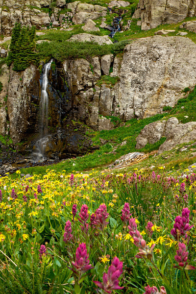 Porphyry Falls and a variety of wildflowers. Taken in the San Juan National Forest, Colorado, USA.