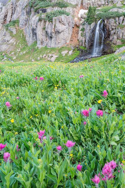 Wildflowers and Porphyry Falls. Taken in the San Juan National Forest, Colorado, USA.