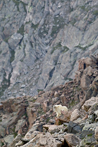 """Amongst the Vastness""  I hope you can get the feeling of how vast the wilderness can be. It's nice to get away from the crowds and roads sometimes and just be alone with a mountain goat in the rugged environment. Taken in the Mt. Evans Wilderness Area, Colorado, USA. You'll definitely want to look at this in the larger version, as the mountain goat is small in the frame."