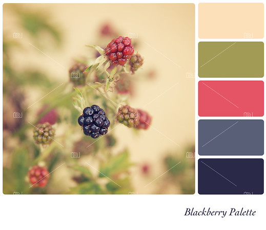 Blackberry Palette