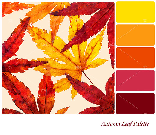 Autumn leaf palette