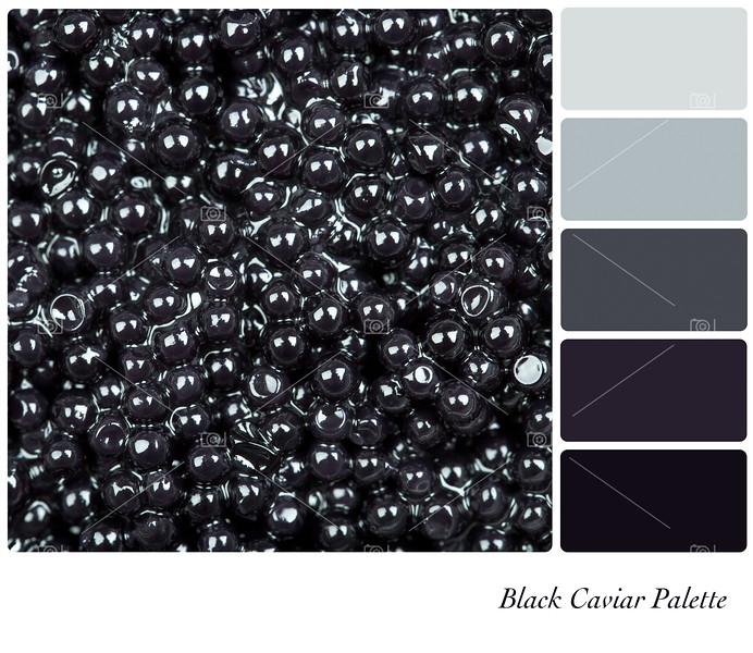 Black Caviar Palette