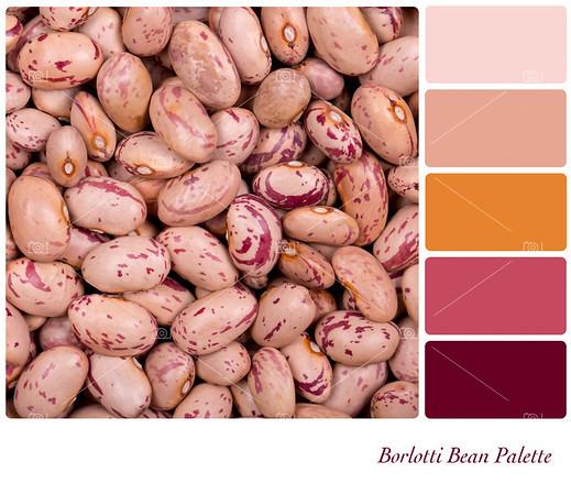 Borlotti Bean Palette