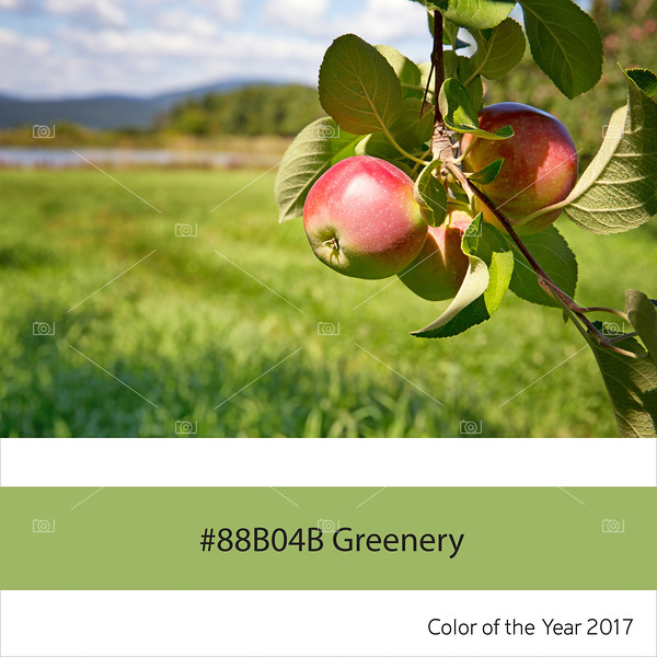 Greenery, color of the year - Apple Orchard