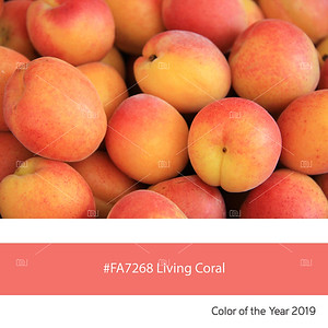 Living Coral  Color of the Year, fresh apricots