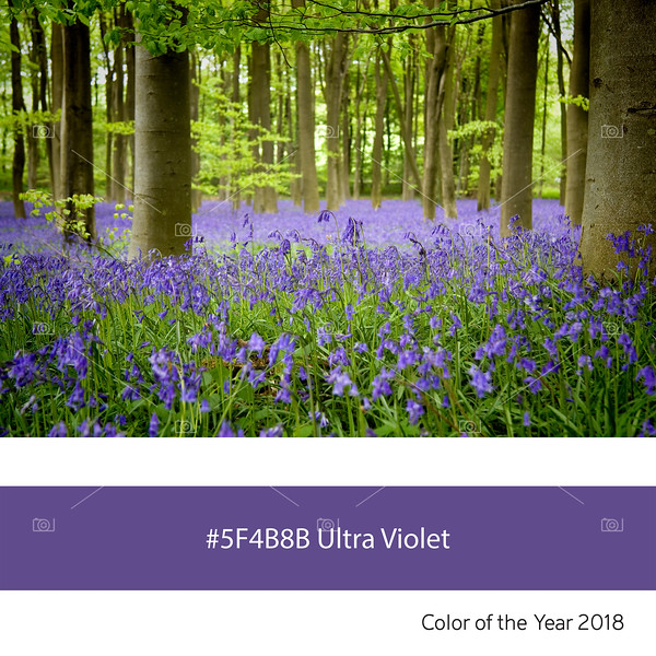 Ultra Violet Color of the Year - Bluebell wood