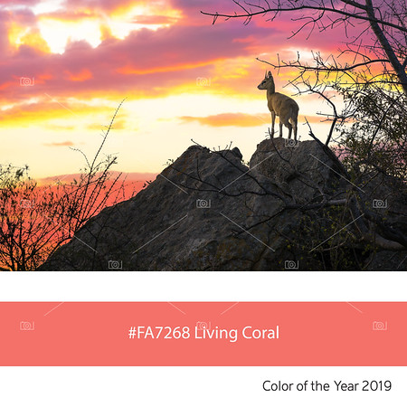 Living Coral  Color of the Year, Steenbok at sunset