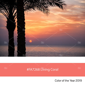 Living Coral  Color of the Year, palm trees at sunrise