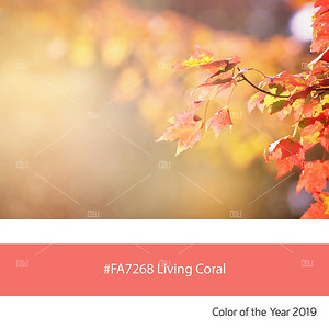 Living Coral  Color of the Year, Maple leaves
