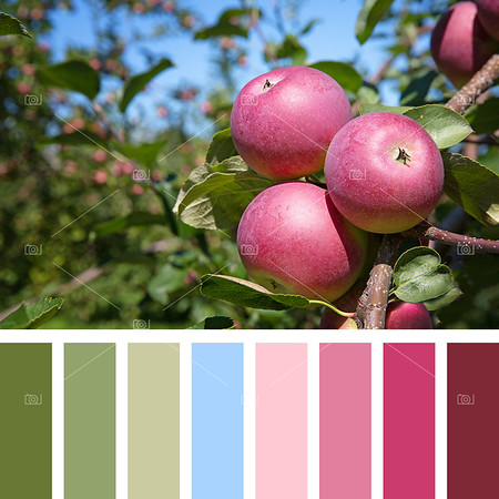 Apple tree palette