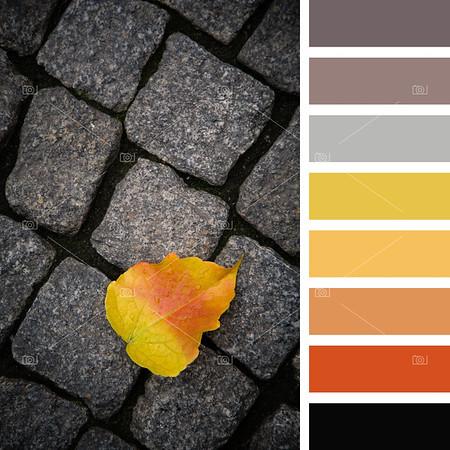 Autumn leaf palette
