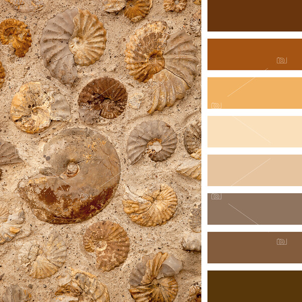 Ammonites palette