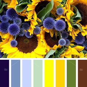 Allium and sunflower palette palette