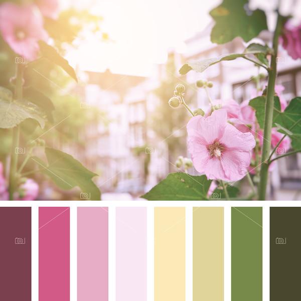 Amsterdam hollyhocks palette