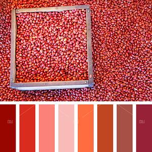 Azuki bean palette