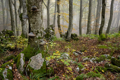 Trnovski Forest