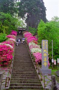 雨の大興善寺