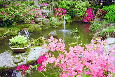 つつじ咲く池