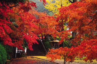 境内の秋彩