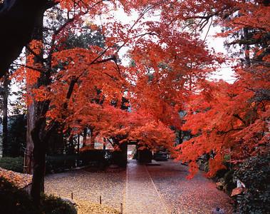 紅葉と落葉