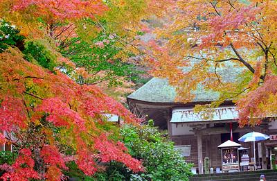 晩秋の大興善寺