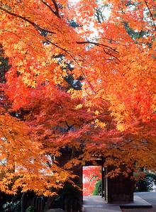 大興善寺の秋探し
