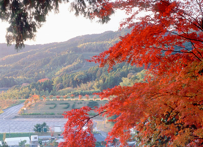 秋のつつじ寺