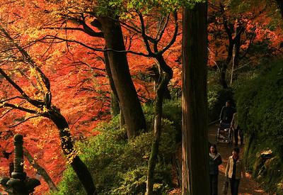 錦秋の散歩径