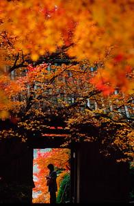古刹山門の秋