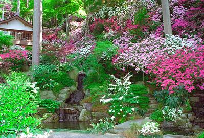 つつじ爛漫の庭園