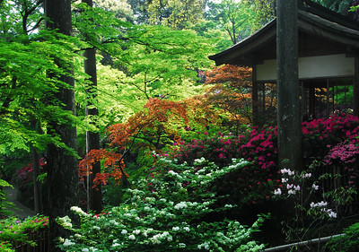 春の大興善寺