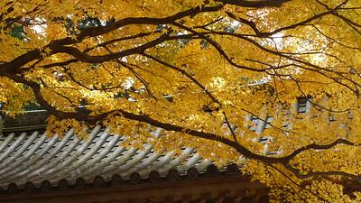 大興善寺の秋