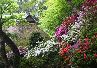 大興善寺の春光