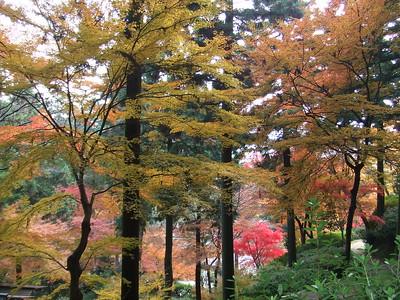 大興善寺の秋~紅葉の楽園~