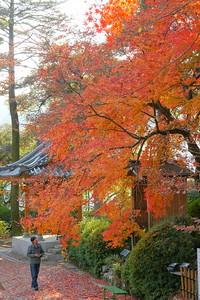 紅落葉の参道