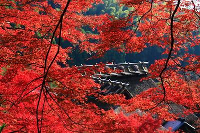紅葉に守られた寺院