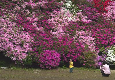 ほほえむ花々