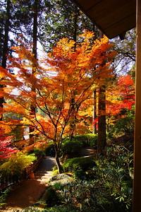 深秋の輝き