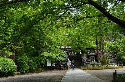 新緑の大興善寺