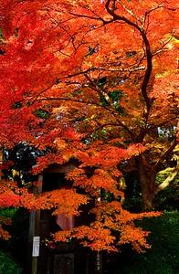 御地蔵様の鮮やかな紅葉